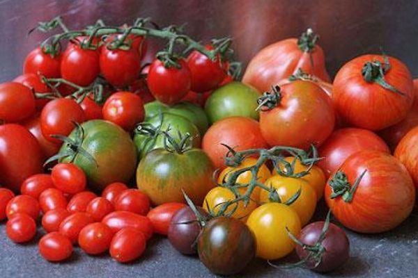 Разновидности томатов