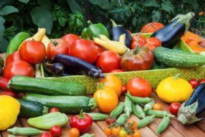 После каких аграрных культур можно сажать помидоры