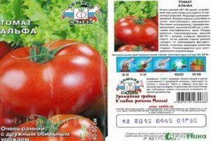 Описание супердетерминантного томата Альфа и рекомендации по выращиванию сорта