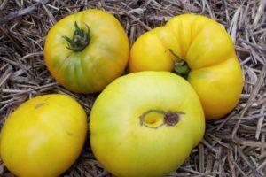 Характеристика томата сорта Ананасный, выращивание и уход