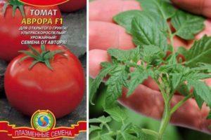 Преимущества томата Аврора и агротехника выращивания гибрида