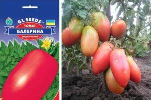 Описание красивого томата Балерина и правила выращивания рассады