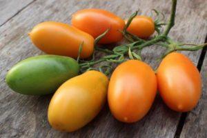 Описание экзотического сорта томата Банан оранжевый и выращивание в огороде