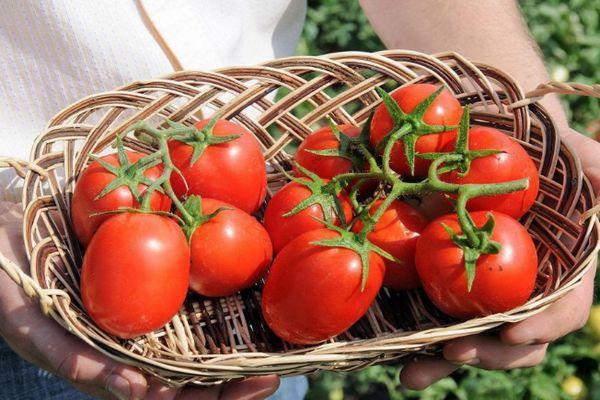Корзинка с томатами