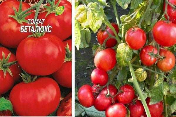 Ультраранние томаты