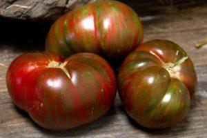 Характеристика томата Большой полосатый кабан и особенности выращивания