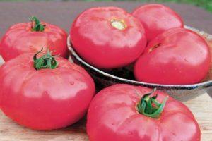 Описание томата Бугай розовый и агротехника культивирования гибрида