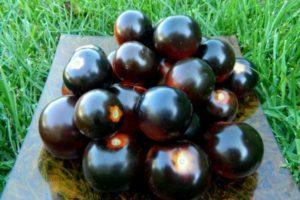 Описание гибридного томата Черная гроздь и рекомендации по выращиванию в открытом грунте