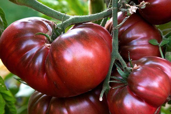 Экзотический томат