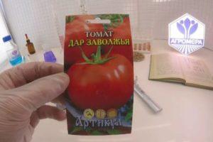 Характеристика раннеспелого томата Дар Заволжья и особенности выращивания