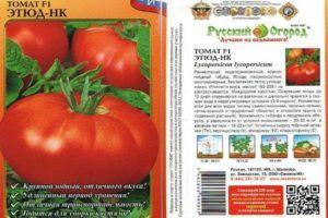 Характеристика томата Этюд-НК и выращивание гибрида