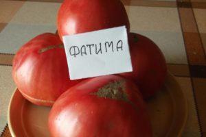 Подробное описание сорта томатов Фатима и особенности выращивания в открытом грунте