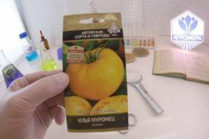 Описание среднераннего томата Илья Муромец и агротехника выращивания