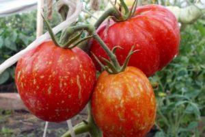 Описание томата Каскад и пошаговая инструкция по выращиванию сорта