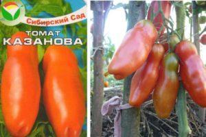 Описание томата Казанова и агротехника выращивания
