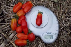 Описание гибридного томата Кибиц и выращивание рассады своими руками