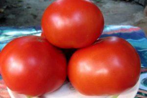 Описание гибридного томата Красным Красно, выращивание и уход
