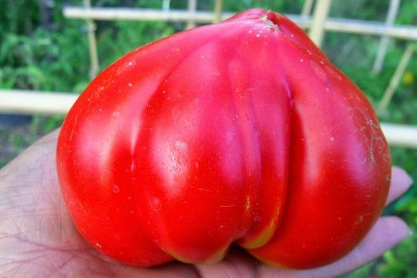 Крупный томат