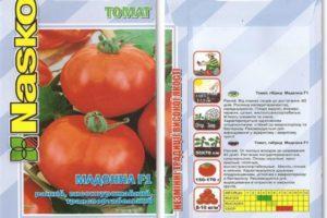 Описание томата Мадонна F1 и советы по выращиванию рассадным методом