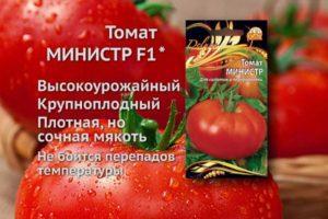 Описание томата Министр, выращивание и борьба с грибковыми инфекциями