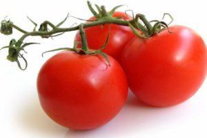 Характеристика томата Мишка на Севере и советы по выращиванию сорта