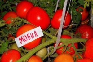 Характеристика и описание потребительских свойств сорта томатов Мобил