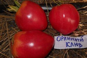 Описание сорта томата Орлиный клюв, его характеристика и урожайность