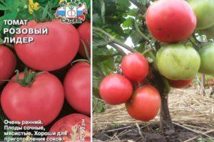 Описание томата Розовый Лидер, выращивание рассады и правила ухода