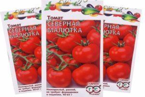 Описание томата Северная малютка и рекомендации по выращиванию сорта