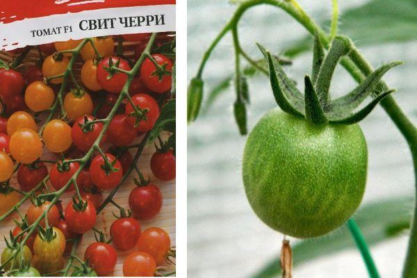 Мелкоплодные помидоры