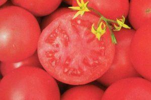 Описание гибрида Тарпан и агротехника культивирования томата