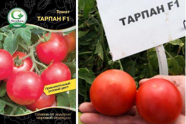 Помидоры Тарпан