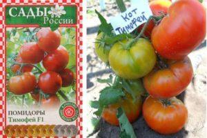 Характеристика гибридного томата Тимофей F1 и правила выращивания рассады