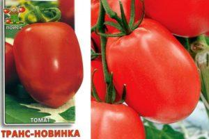 Описание томата Транс новинка, выращивание рассады и уход