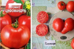 Описание уникального томата сорта Цифомандра, выращивание рассады и профилактика от болезней