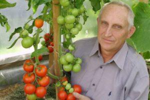 Описание раннеспелого и урожайного томата Уникальный Кульчицкого
