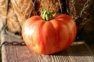 Характеристика томата Винтейдж вайн, выращивание и урожайность гибрида