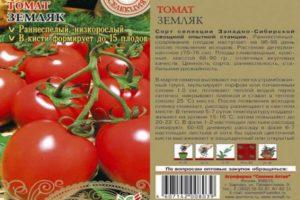 Характеристика томата Земляк и выращивание сорта