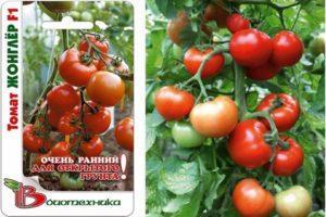 Описание томата сорта Жонглер f1, способы разведения и борьба с вредителями