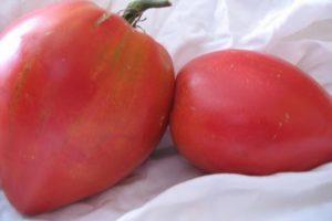Характеристика томата Обские купола F1 и описание выращивания гибрида