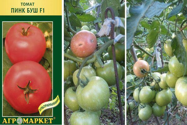 Семена помидор