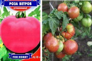 Характеристика и потребительские качества сорта томата Роза ветров