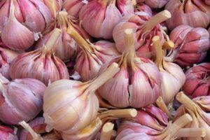 Описание сорта чеснока Грибовский, выращивание и сбор урожая