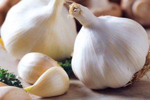 Описание чеснока Сибирский гигант и особенности выращивания сорта