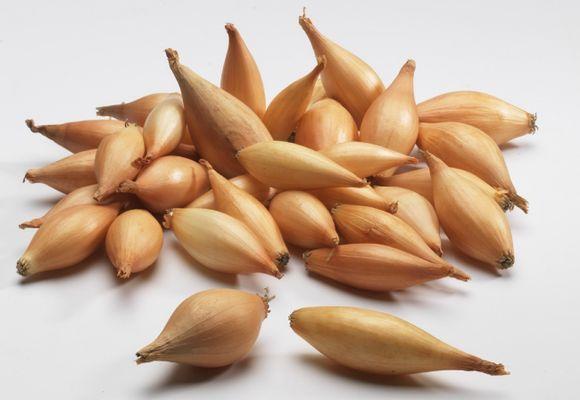 Длинные луковицы