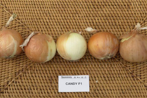 луковицы кенди