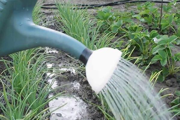 полив овощей