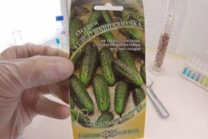 Описание сорта огурцов Бабушкин внучок F1, выращивание и борьба с вредителями