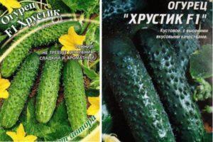 Описание огурца Хрустик f1 и методы выращивания сорта