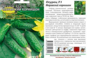 Описание огурцов Моравский корнишон f1 и рекомендации по выращиванию гибрида